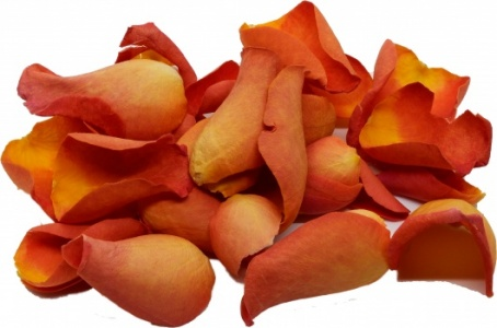 Dark Orange Rose Petals