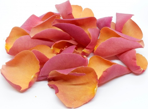 Burnt Orange Rose Petals